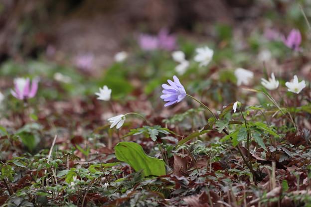[2020年03月15日]武蔵丘陵森林公園3
