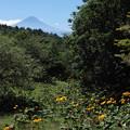 Photos: [2020年8月15日]三窪高原1