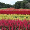 [2020年9月27日]武蔵丘陵森林公園2