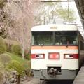 東武350系枝垂れ桜の東武日光駅入線