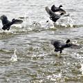 水面の徒競走