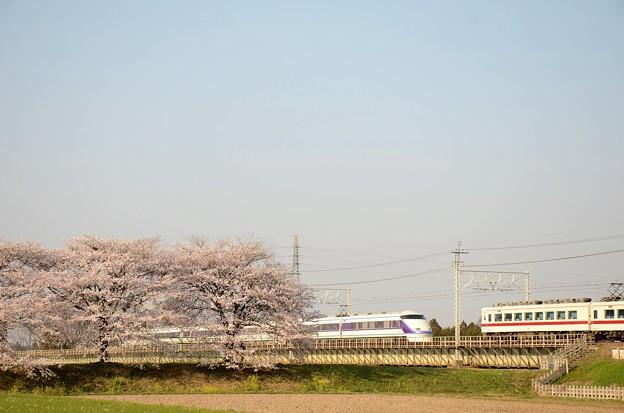 思川桜堤の離合
