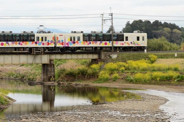 菜の花咲く姿川橋梁を行くスカイツリートレイン