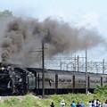 Photos: D51 498牽引SL本物の出会い栃木号岩舟発車