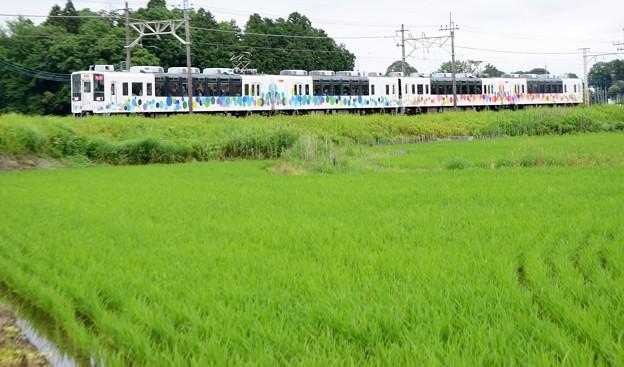 東武宇都宮線フリー乗車DAY臨時スカイツリートレイン