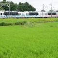 東武宇都宮線フリー乗車DAY臨時スカイツリータウントレイン