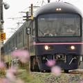 秋桜咲く日光線を行く485系「華」