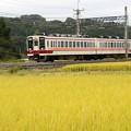 写真: 東武6050系