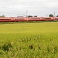 Photos: E253系日光号