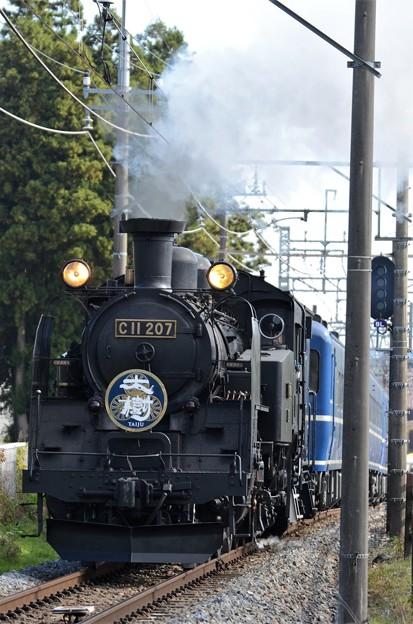 Photos: カニ目のC11 207号機牽引SL大樹