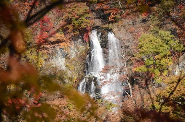 秋色 霧降の滝
