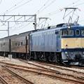 Photos: EF64 37+旧型客車+EF65 501団臨