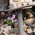 線路バラストに咲く小さな花