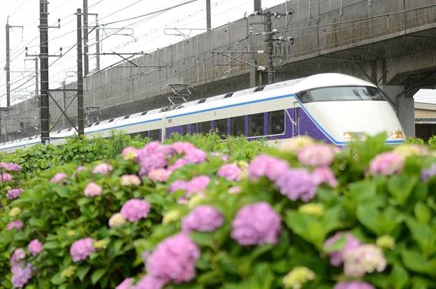 紫陽花の宇都宮線を行く臨時特急スペーシア那須野号