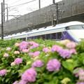 Photos: 紫陽花の宇都宮線を行く臨時特急スペーシア那須野号