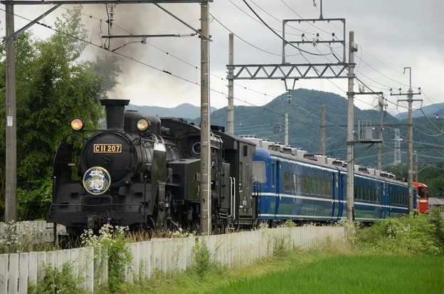 Photos: C11 207号機牽引ŞL大樹4号