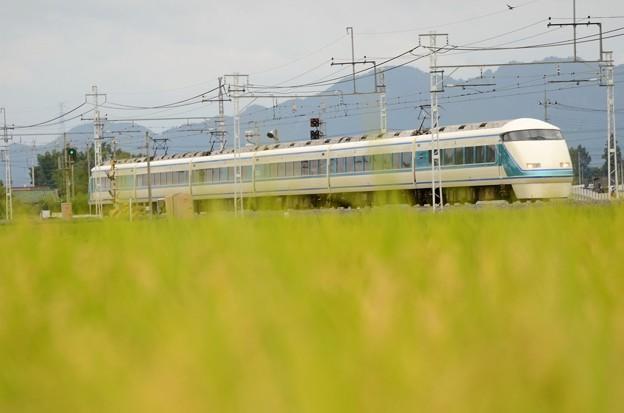 稲穂実る東武日光線を行く特急けごん34号