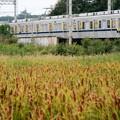 Photos: 秋色の東武宇都宮線・蒲の穂