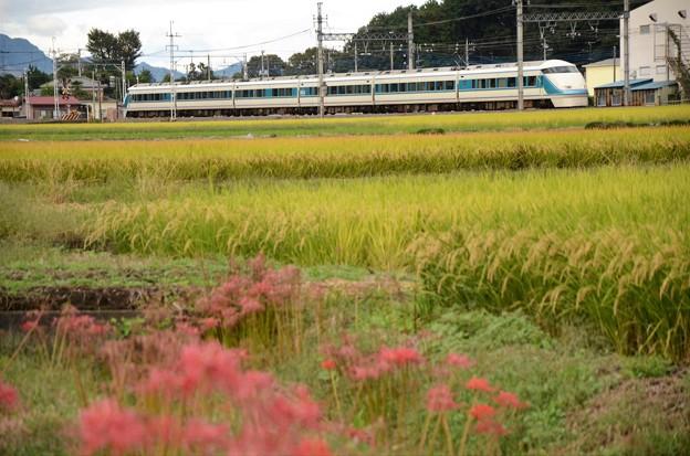 秋色の東武日光線を行く特急けごん36号