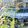 秋の貨物駅にEF65白プレート2050号機