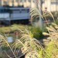 写真: 秋色の宇都宮貨物ターミナル駅