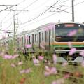Photos: 秋桜の宇都宮線