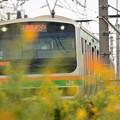 Photos: コスモスの上野東京ライン