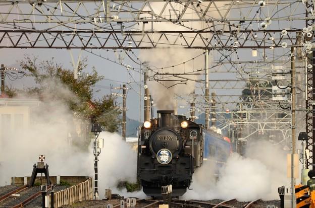 Photos: SL大樹出動!