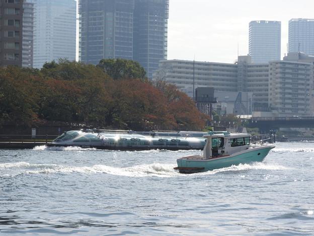 秋の隅田川を行くホタルナ