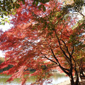 Photos: 池端の紅葉並木