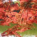 水面の反射光に染まる紅葉