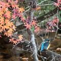 紅葉と翡翠