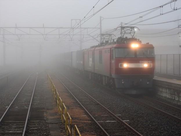 Photos: 霧の金太郎カンガルーライナー