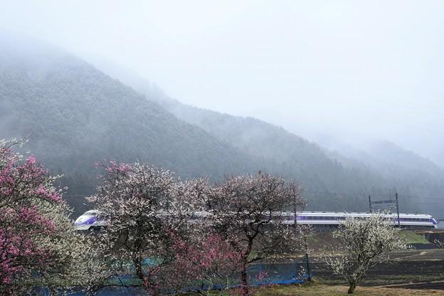 小雪模様の梅咲く東武日光線 スペーシア