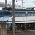 Photos: EF65白プレート2050号機