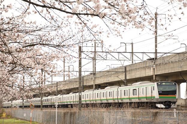 桜咲く宇都宮線 E233系宇都宮行き