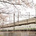 Photos: 桜咲く宇都宮線 E233系宇都宮行き