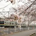 桜咲く宇都宮線 E231系快速逗子行き