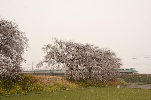 Photos: 桜・菜の花・なごり雪・スペーシア