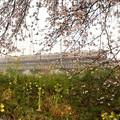 Photos: 菜の花の桜堤を行く東武6050系リバイバル色