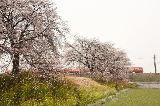 菜の花・桜・なごり雪・赤い特急