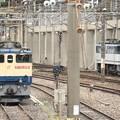Photos: EF65原色とJR貨物色