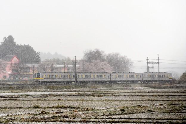 桜と雪の東武宇都宮線
