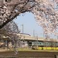 桜と菜の花咲く宇都宮線・東北新幹線