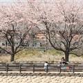 桜並木と宇都宮線