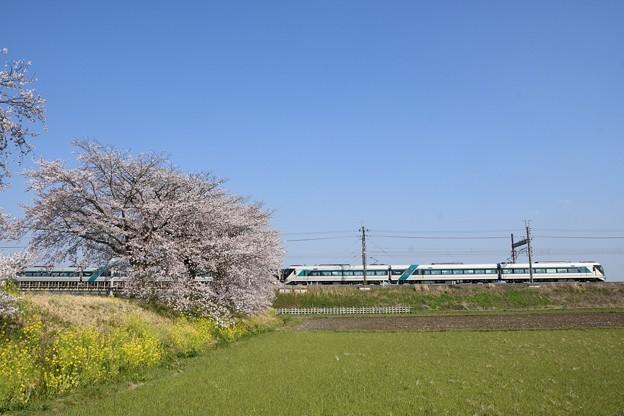 東武金崎思川桜堤を行く東武リバティ