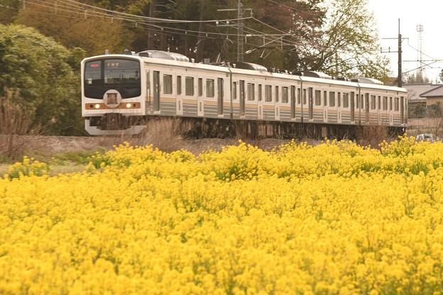 Photos: 菜の花咲く日光線を行く205系「いろは」