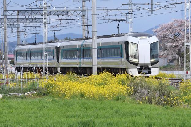 菜の花と桜の東武日光線リバティ