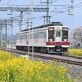 菜の花と桜の東武日光線6050系区間急行