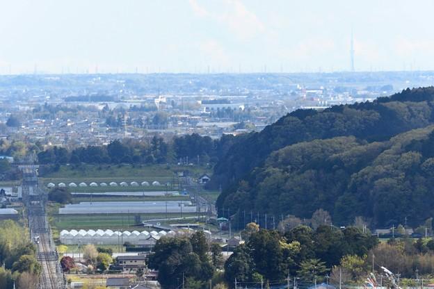 遥か東京スカイツリーを目指すリバティ